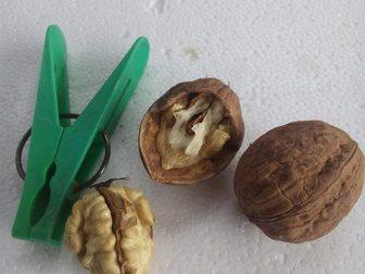 Просмотреть фото  Продам Грецкий Орех в скорлупе! Новый Урожай 2015 33696771 в Кисловодске
