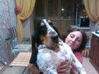 Изображение в Собаки и щенки Вязка собак Ищем невесту для вязки. в Луховицы 0