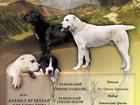 Изображение в   Предлагаем щенков среднеазиатской овчарки! в Клине 30000