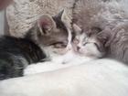 Смотреть foto Другие животные Отдам котят в добрые руки 34321704 в Коломне
