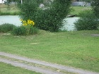 Скачать изображение Земельные участки Участок 12 сот, в дер, Фоминское 34499248 в Коломне