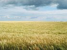 Новое изображение Земельные участки Участок без посредников, Конев Бор,Коломна 37340609 в Коломне