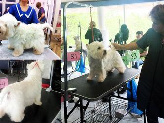 Скачать foto Услуги для животных Профессиональный грумер, Стрижка собак,тримминг 12837013 в Москве