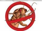 Скачать бесплатно foto Разное уничтожение-выведение травля клопов тараканов Нано технология генератора холодного тумана гарантия 33985488 в Ивантеевке