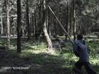 Скачать бесплатно фото Разное Удаление деревьев 36630051 в Королеве