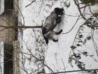 Скачать бесплатно foto Найденные Найдена собака (видимо спаниель) 37736040 в Королеве