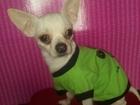 Свежее фотографию Вязка собак Ищем девочку 38984216 в Королеве
