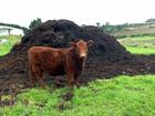 Смотреть фотографию Разное Навоз, плодородный грунт, торф 35132719 в Костроме