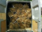 Солома и сено в мешках,кипах,рулонах и гранулы тра