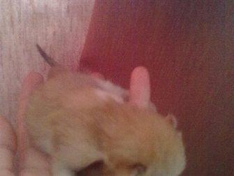 Скачать фотографию Отдам даром пасхальные котята 32622761 в Костроме