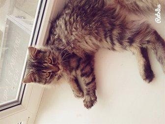 Новое фото Отдам даром Отдадим кота в хорошие руки 33110948 в Костроме