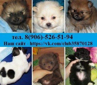 Фото в Собаки и щенки Продажа собак, щенков Недорого в продаже по хорошим ценам 0т 8500 в Костроме 8500