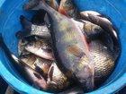 Скачать фото  Рыбалка весной в Краснодарском крае и отдых 32592464 в Краснодаре