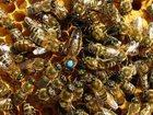 Фото в   Ищу партнёра по пчеловодству в Краснодаре, в Краснодаре 0