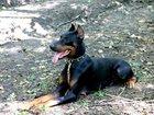 Скачать foto  Дрессировка собак 32949056 в Краснодаре