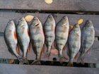 Изображение в   Доброго времени суток всем рыболовам и посетителям в Краснодаре 300