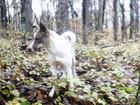 Фото в Отдам даром - Приму в дар Отдам даром Молодая собака, возраст 1, 5 года, окрас в Краснодаре 0