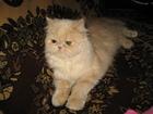 Фотография в   Отдам кошку в хорошие руки, к лотку приучена, в Краснодаре 0