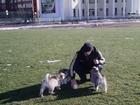 Фотография в Собаки и щенки Продажа собак, щенков Предлагаются к продаже очаровательные щенки в Тихорецке 0