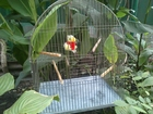 Фото в  Отдам даром - приму в дар Отдам просторную клетку для птиц. Металлическая. в Краснодаре 0