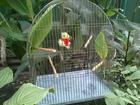 Скачать foto Отдам даром - приму в дар Клетка для птиц, Краснодар, ЦМР, 38372738 в Краснодаре