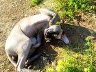 Фото в Кошки и котята Вязка Кот канадского сфинкса ищет подругу для вязки в Краснодаре 2500