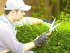 Смотреть изображение Помощь по дому работа садовник 39280952 в Краснодаре
