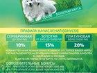 Смотреть фотографию  Чистка зубов ультразвуком без наркоза у животных 39281173 в Краснодаре