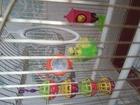 Смотреть фотографию  Отдам даром попугая волнистого мальчика 39286515 в Краснодаре