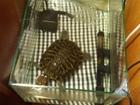 Скачать изображение  Милая большая черепаха с аквариумом 40757292 в Краснодаре