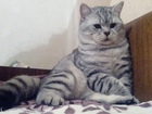 Скачать foto  Здоровый кот ищет кошечку с прививками, 42636020 в Краснодаре