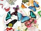 Свежее foto Разное Салют из Восхитительных Живых Бабочек изЮАР на любой праздник 44744031 в Краснодаре