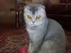 Уникальное изображение Вязка кошек Ищем кота для нашей кошечки 51279076 в Краснодаре