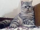 Скачать foto  Здоровый кот ищет кошечку с прививками, 59887704 в Краснодаре