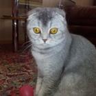 Ищем кота для нашей кошечки