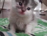 Отдам в хорошие руки котят Котята без мамы. Осталось два мальчика. Им около меся
