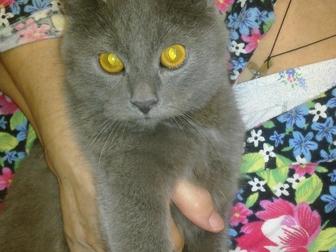 Новое foto Отдам даром - приму в дар Красивый котенок ждет своего доброго и заботливого хозяина 38555704 в Краснодаре