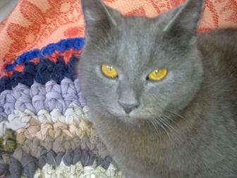 Новое фотографию Отдам даром - приму в дар Красивый котенок ждет своего доброго и заботливого хозяина 38555704 в Краснодаре