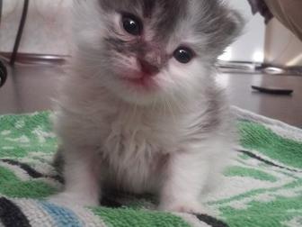 Просмотреть foto Отдам даром - приму в дар Отдам в хорошие руки котят! 38898817 в Краснодаре