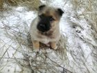 Фотография в Собаки и щенки Продажа собак, щенков Отдам щенка в добрые, заботливые руки. Девочка, в Красноярске 0