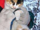 Фотография в Кошки и котята Продажа кошек и котят Милая умная кошечка 4 мес ищет свою хозяйку в Красноярске 0