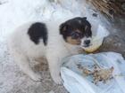Скачать бесплатно foto  щенки в добрые руки 34635293 в Красноярске