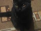 Фото в Кошки и котята Вязка Прививки есть. Документов нет Связываться в Красноярске 0