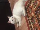 Смотреть фото  Найден кот 37105843 в Красноярске