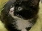 Фото в   Подарим в хорошие руки 2, 5 мес кошечку, в Красноярске 0