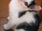 Фото в Отдам даром - Приму в дар Отдам даром Милая девчушка, возраст примерно 2-3 месяца. в Красноярске 0