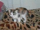 Скачать бесплатно изображение Отдам даром Отдам котят 37616656 в Красноярске