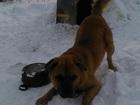 Скачать бесплатно foto Отдам даром - приму в дар Отдам собаку добрым людям 37751181 в Красноярске