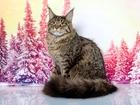 Изображение в   Шикарный кот для дружеских отношений в Красноярске 0