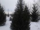 Фото в Строительство и ремонт Ландшафтный дизайн В нашей компании Сибирский Питомник всегда в Красноярске 0